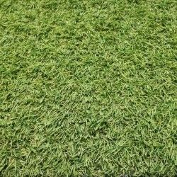 Искусственная трава Terazza 18мм (2м.)